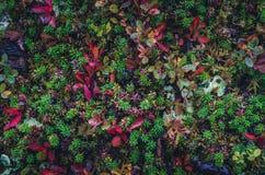 Textures colorées de mousse Images libres de droits