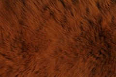 Textures d'animal de fourrure, ours Photos stock