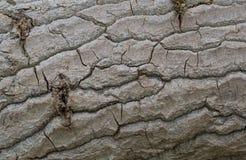 Textures d'arbre Photos stock