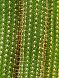textures d'instruction-macro de cactus aïe Photos libres de droits