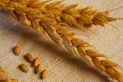 Textures de blé photo libre de droits