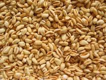 Textures de blé photos libres de droits