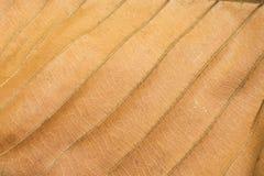 Textures de feuille de Brown Photo libre de droits