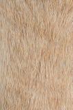 Textures de fourrure de chien Images libres de droits