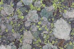 Textures de lichen Images libres de droits