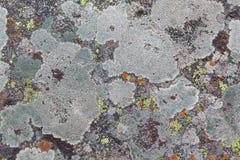 Textures de lichen Photo libre de droits