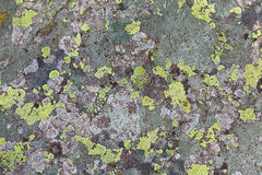 Textures de lichen Photo stock