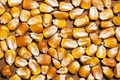 Textures de maïs. Photographie stock