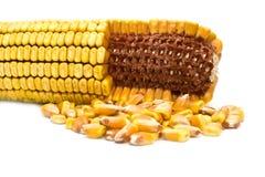 textures de maïs Photo stock