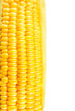 Textures de maïs mûr Photo libre de droits