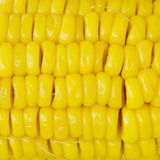 Textures de maïs mûr Image stock