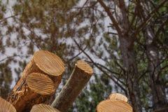Textures de notation de grain de tronçon d'arbre photographie stock