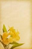 Textures de papier. Images libres de droits