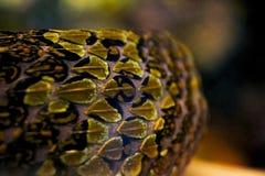 Textures de peau de montagne Pit Viper de Mang image stock