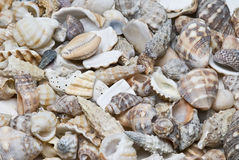 Textures de Seashells. photographie stock