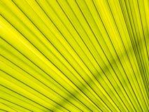 Textures de section verte de palmettes Image stock