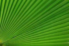 Textures des palmettes vertes Photo stock