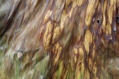 Textures of Dried banana leaf. stock photos