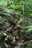 Textures en bois de forêt en été Photographie stock