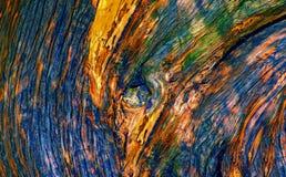 Textures en bois de tronc d'arbre Photo libre de droits