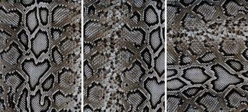 Textures en cuir de peau de serpent Image libre de droits