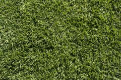 Textures et milieux abstraits : Herbe verte Images stock