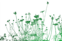 Textures florales Images libres de droits