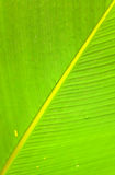 Textures of green palm leaf Stock Images
