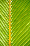Textures of Green Palm leaves Stock Photo