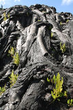 Textures of lava in Hawaii Royalty Free Stock Photos