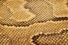 Textures o â Snakeskin #04 Imagem de Stock