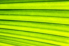 Texture of A Palm Leaf for Background stock photo