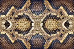 Textures and patterns of the boa. Textures and patterns of the boa For the background royalty free stock image