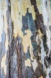 Textures of plane trees. Different colors and shades. Yellow, green, blue, brown and gray. The background of tree trunks. Textures background of plane trees stock photos
