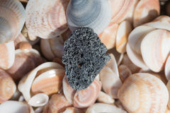 Textures sea shells Royalty Free Stock Photo