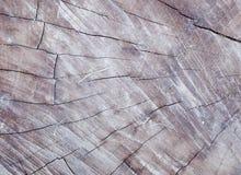 textures trä Royaltyfria Foton