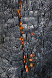 Textures  tree   burnt Royalty Free Stock Photo