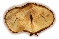 Textures   tree   linden Royalty Free Stock Photo
