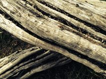 Textures trees. Photo of fallen tree highlighting wood textures Stock Photography
