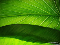 Textures vertes Photos libres de droits