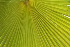 Textures vertes Photographie stock libre de droits