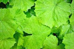 Textures vertes de feuilles Photo libre de droits