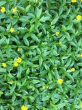 Textures vertes de fond Photo stock