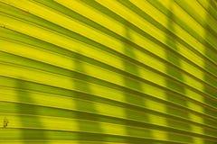Textures vertes de palmettes Images libres de droits