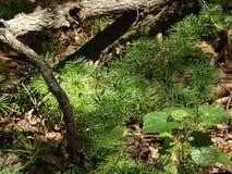 Textures vertes uniques de région boisée Image libre de droits