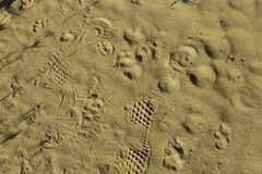 Texturfotspår i sanden Arkivfoto