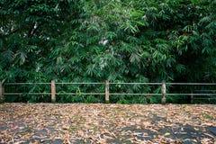 Texturhöstbakgrund från torkade tropiska sidor Arkivfoto