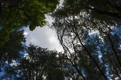 Texturhimmel och skog fotografering för bildbyråer
