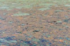 Texturice el agua del lago se contamina con la superficie de las bacterias Fotos de archivo
