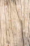 Texturice la madera vieja, fondo de madera superficial sucio, madera dura Fotografía de archivo
